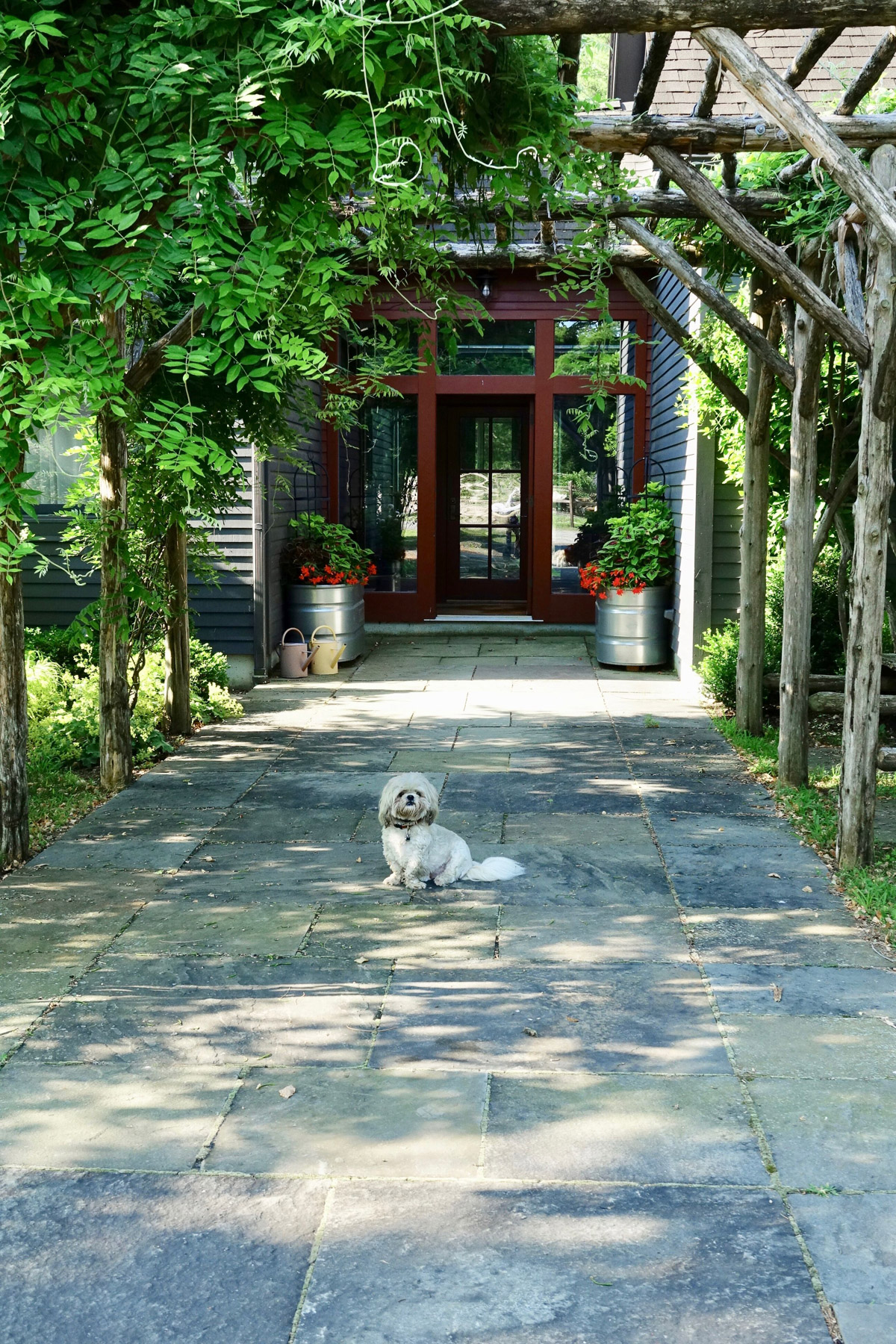 Entrry way trellis with Beo the dog